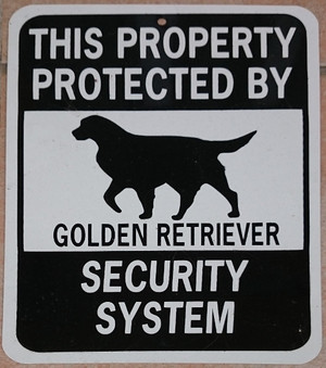 Protected_by_golden_retriever